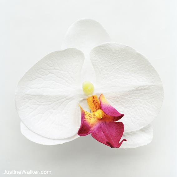 Phalaenopsis, Hybrid, City Girl